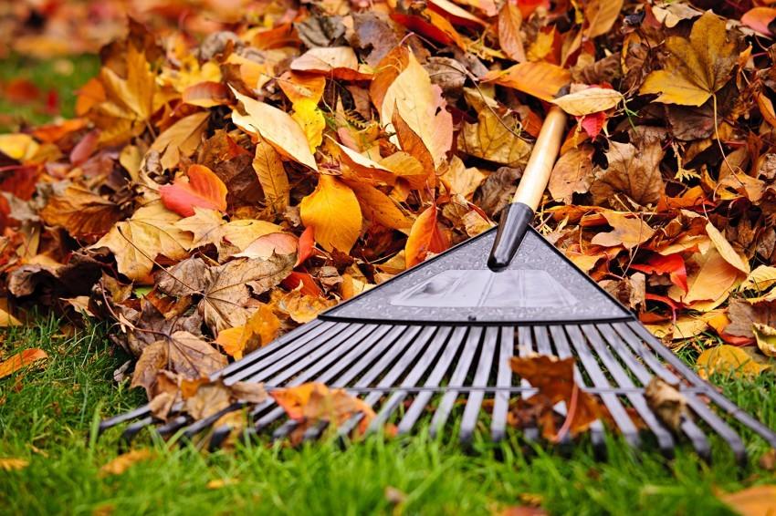 Grabienie liści i inne prace porządkowe